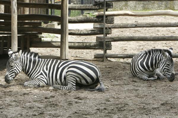 Zoologijos sodo gimtadienis – su naujais augintiniais