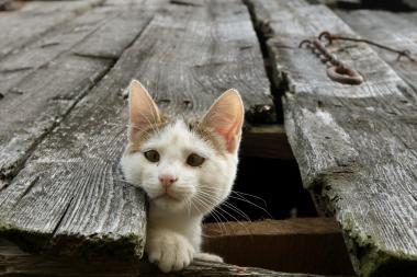 Anglijos pajūrio kaime atklydo katinas iš Prancūzijos