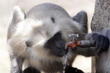 Žaidynių sportininkus saugos šunbeždžionės
