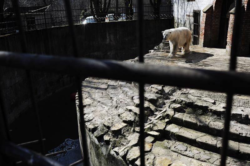 Zoologijos sodo ateities planus pieš už ketvirtį milijono