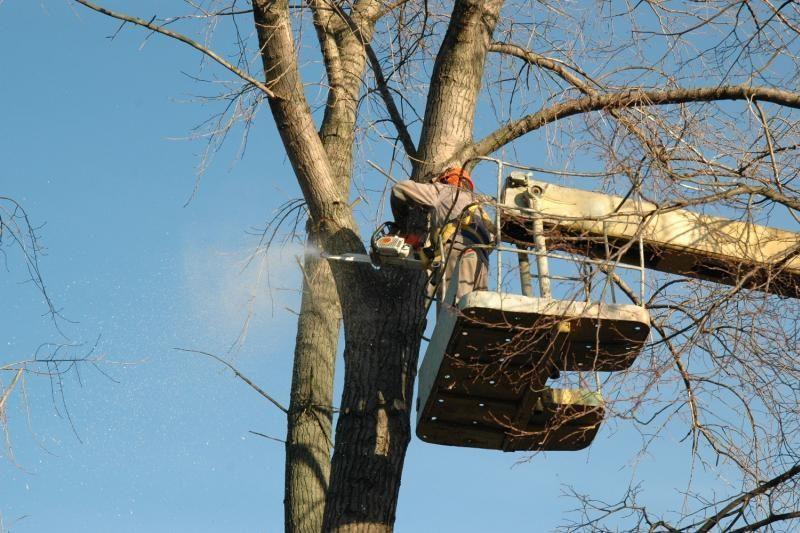 Už savavališką medžių genėjimą gresia baudos