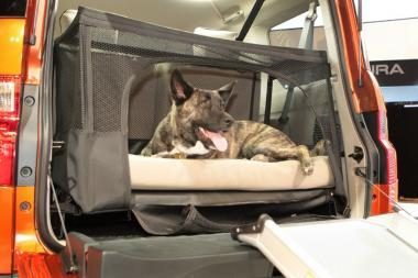 Pasirodė automobilis draugiškas šunims