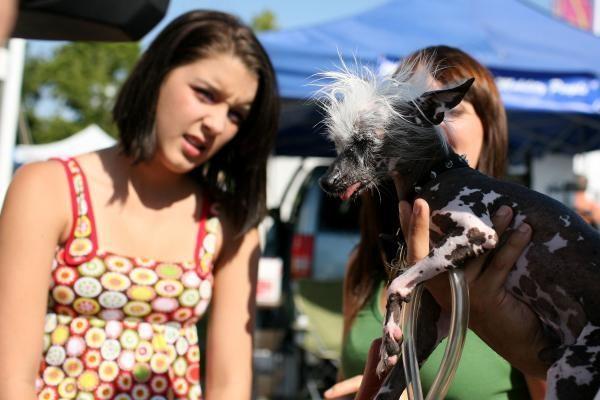 Bjauriausio šuns konkurse triumfavo dantuotasis baisuoklis