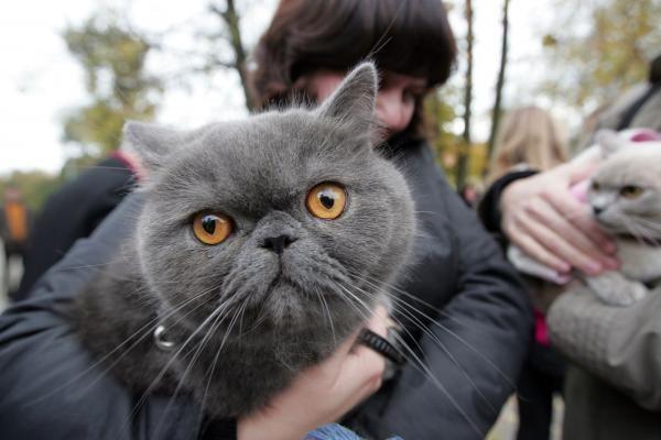 Vilniuje buvo šventinami naminiai gyvūnai