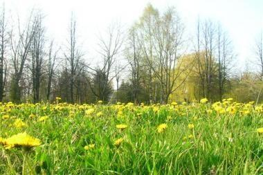 Vyriausybė žada: grąžintos žemės Vilniaus krašte bus daugiau