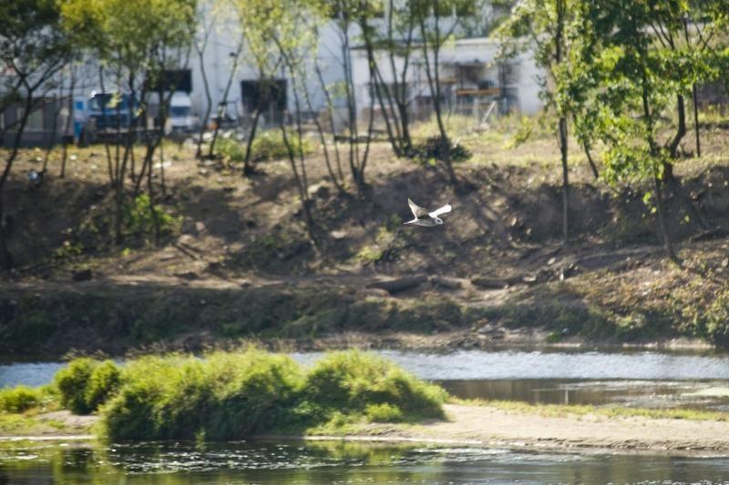Vilniaus rajone Neryje rastas suiręs kūnas