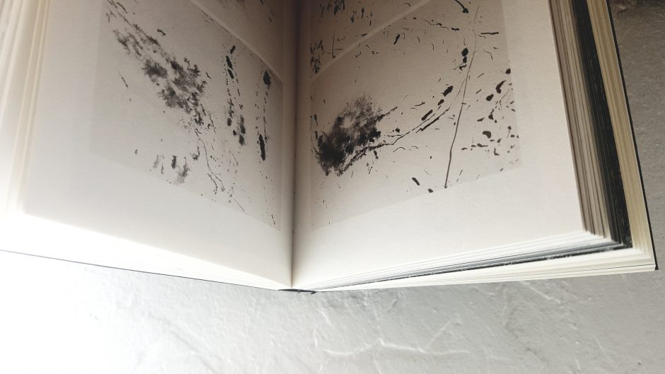 Apie ką knygas rašo vabzdžiai?