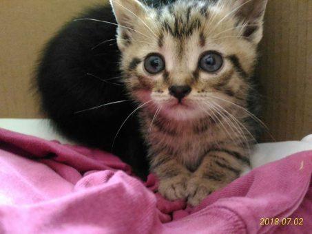 Skelbimas - Dovanojamas katinukas