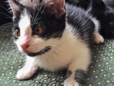 Skelbimas - Dovanojama 3 mėn katytė