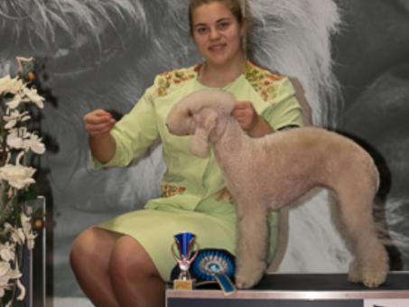 Skelbimas - Šunų ruošimas parodoms Kaune