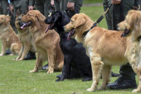 Šunų mylėtojai draudimų nepaiso?
