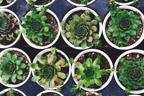 Floristas paaiškino, kaip taisyklingai persodinti augalą: prireiks ir kačių kraiko