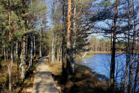 Ilgiausias Lietuvoje pažintinis takas pelkėje dar ilgės