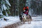 Žiemos pramogos su šunų kinkiniais