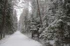 Žiema sugrįžo: Kleboniškio mišką nuklojo sniegas