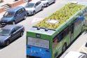 Sodas ant autobuso stogo – įgyvendinta idėja Ispanijoje