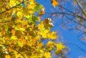 Pirmosios rudens dienos bus maloniai šiltos