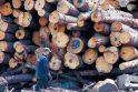 Utenoje atidaryta pirmoji specializuota medžio briketų gamykla šalyje