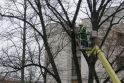 Vilniaus centre medžiai neteks dalies šakų