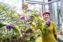 VDU Kauno botanikos sode - pirmieji pavasario pranašai