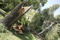 Medžių išvartas ketinama išvežti iki spalio 1-osios