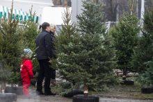 Kalėdos prie tikros ar dirbtinės eglutės?