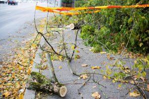 Stiprus vėjas pamaryje vertė medžius