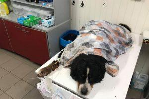 Nesuvokiamas žiaurumas: trosu prie medžio pririštą šunį paliko mirti miške