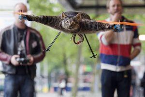 Skraidančios katės neužteko – menininkas sugalvojo į orą pakelti... karvę