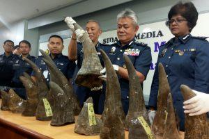 Malaizijoje konfiskuota 18 raganosio ragų iš Mozambiko