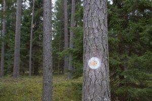 Kol medžių kainos žemos, medkirčiai ilsina kirvius