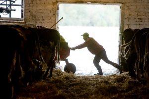 Kvapų normos: kaimo gyventojams teks kęsti didesnę smarvę?