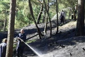 Nidoje keliose vietose degė miškas, įtariamas padegimas