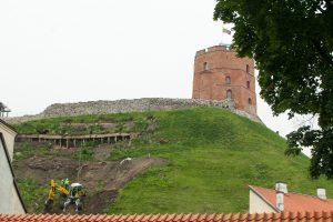 Gedimino kalno šlaitų sutvirtinimui – lietuvių sukurtas augalas?