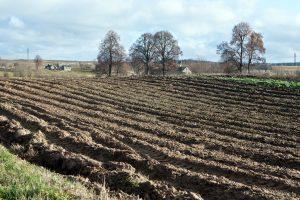 Seimo vadovas mano, kad tam tikri žemės pardavimo apribojimai būtini