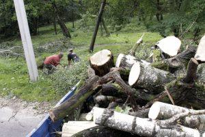 Pasidomėjo, kaip vilniečiai reaguoja į medžių pjovimą mieste