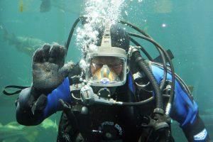 Gyvenimas po vandeniu: yra viskas, ko reikia buičiai
