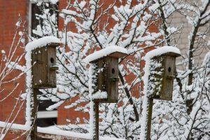 Žiūrėdami į prietaisus tikimės atsakymo, kokia bus žiema