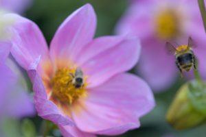 Koks gydymo būdas padės pasveikti nuo įvairių alergijų