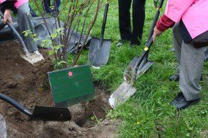 Per nacionalinį miškasodį sieks Lietuvos rekordo