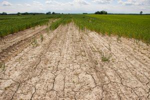 Stichinė sausra Lietuvoje – ne už kalnų