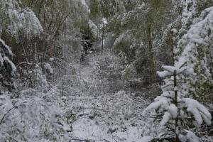 Sniegas pridarė bėdų: be elektros – vis dar 400 vartotojų