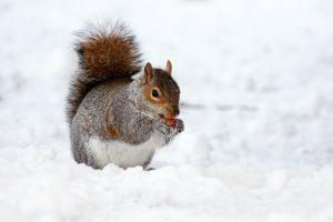 Orai: bus ne tik sniego – šaltukas jau įsibėgėja