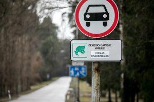 Vingio parke dėl varlių migracijos ribojamas eismas