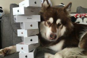 """Turtuolio meilė: kinas nupirko 7 naujausius """"iPhone'us"""" savo šuniui"""