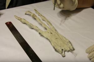 Peru urvuose aptikta tripirštė plaštaka kursto spėliones apie ateivius