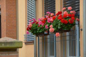 Floristo patarimai, kaip gėlėmis pasipuošti balkoną