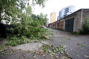 Stiprus vėjas kol kas daug žalos Lietuvoje nepadarė
