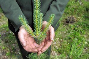 Minima miškininko diena: tai – daugiau nei profesija