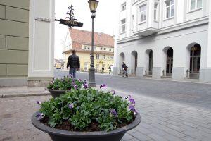 Gėlių žiedams – paskutinės dienos